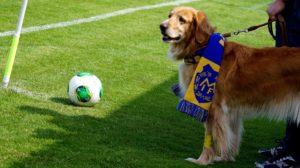 Hunden Maja med halsduk
